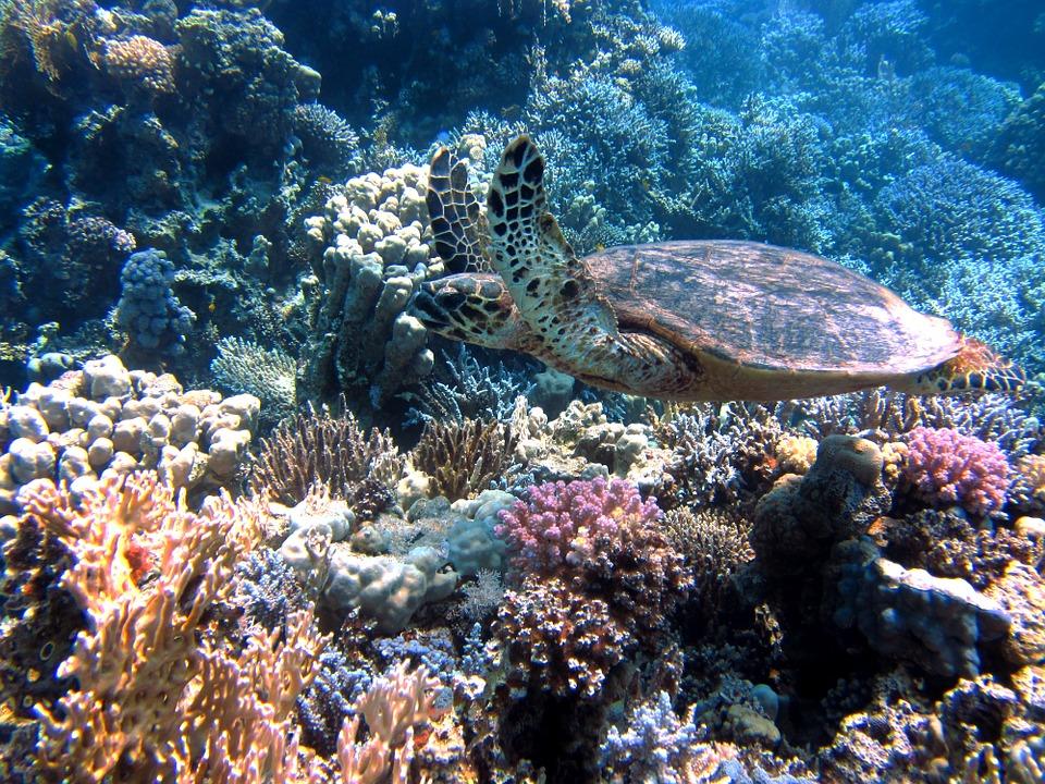 zee schildpad koraal