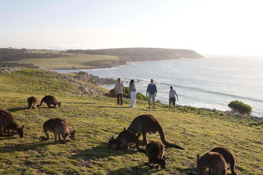 Vier mensen wandelen tussen de kangoeroes langs de kustlijn van Kangaroo Island bij Stokes Bay.