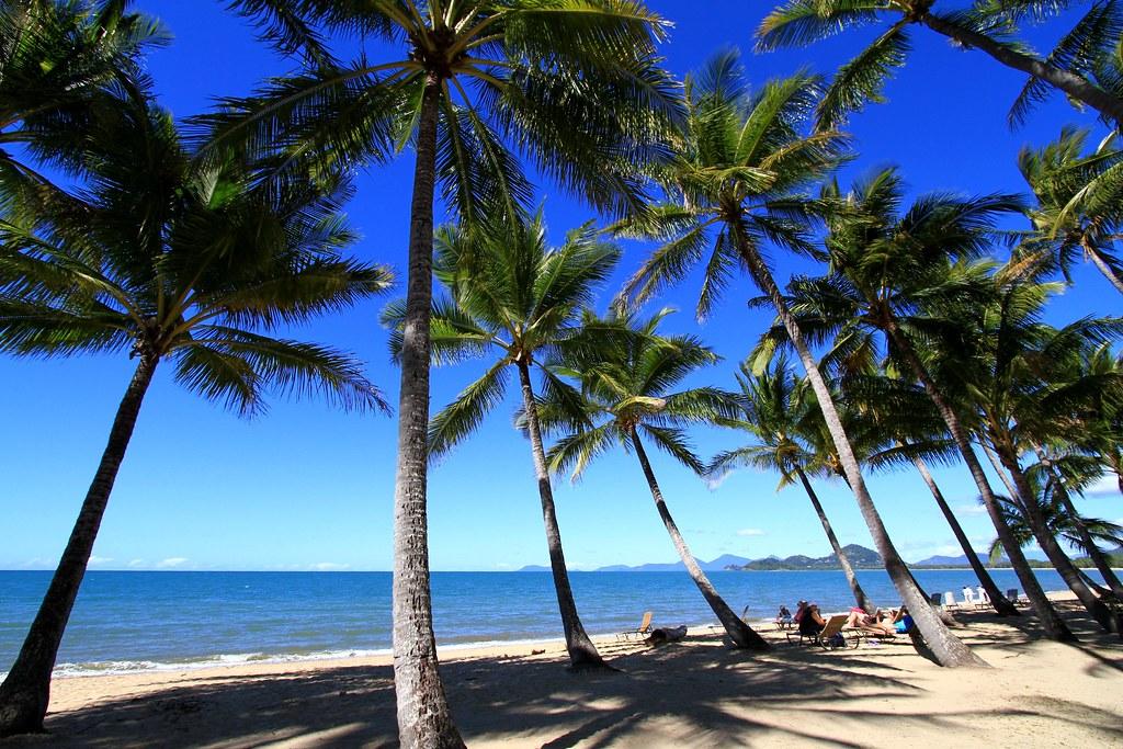 Palm cove sea beach palmtrees